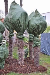 Bambus Pflegen Zimmer : palme f r garten palme im garten pflanzen palme im garten ~ Lizthompson.info Haus und Dekorationen