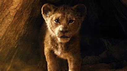 Lion King Wallpapers 5k