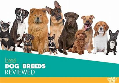 Dog Breeds Breed Perfect Akc Groups Tips