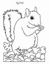 Coloring Clipart Squirrel Pages Clip Clipground sketch template