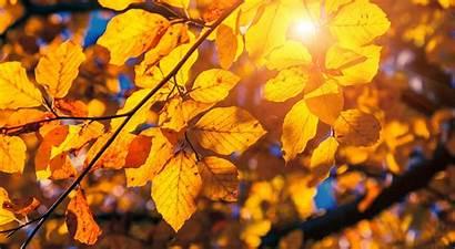 Fall Foliage Slide Maine Wolf Season Cove