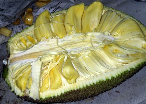 jackfruit the thrills