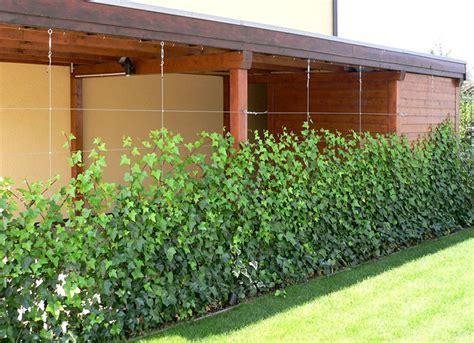 Sichtschutz Mit Pflanzen by Rankhilfen Kletterpflanzen Und Rankhilfen Aus Holz Oder