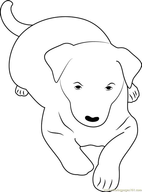 australian kelpie coloring page  dog coloring pages coloringpagescom