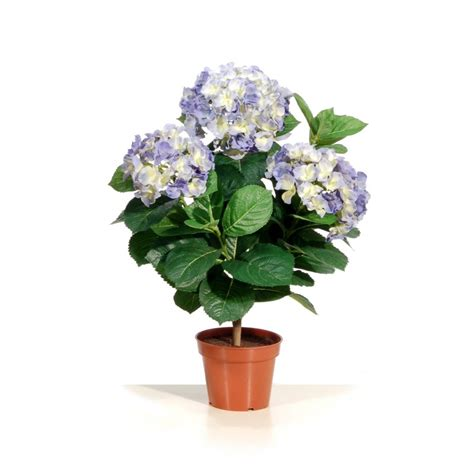 hortensia bleu en pot m 233 tal haut 50 cm d 233 cors du monde