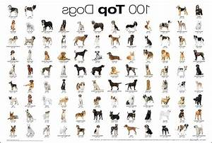 types of dogs list