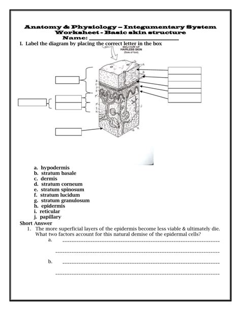 worksheet integumentary system worksheets worksheet fun