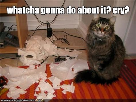 Sassy Cat Meme - 1128 best images about mischievous cats on pinterest