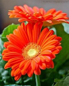 Assainir L Air De La Maison : pour assainir l air de votre maison pensez aux plantes ~ Zukunftsfamilie.com Idées de Décoration