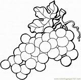 Grapes Grape Coloring Printable Fruits sketch template