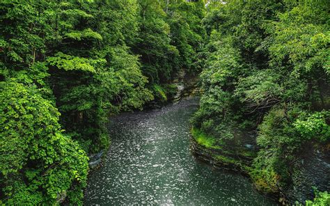 Beautiful Forest And Wild River Wallpapers Beautiful