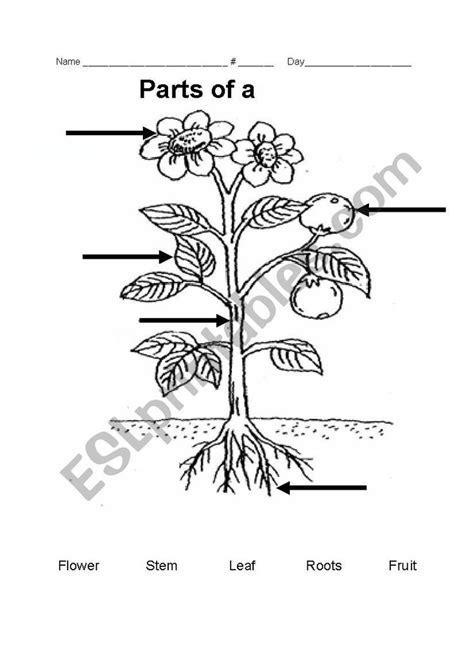 parts   plant esl worksheet  teacherrainbow