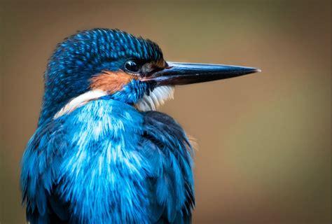FOTO. Košie un krāšņie putni Latvijā: daudzveidīgā ...