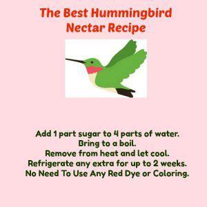 hummingbird nectar recipe  birds delight