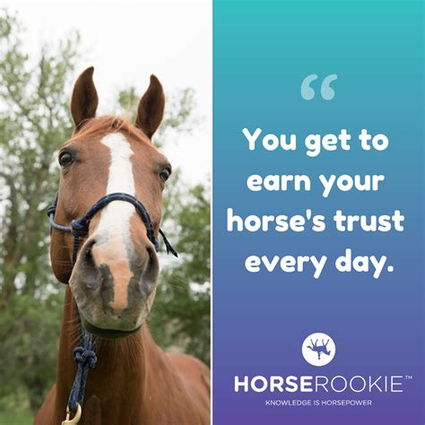 horse questions horserookie fun answer common