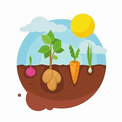 Vegetable Garden Vector Illustration Vectors Clipart Vegetables