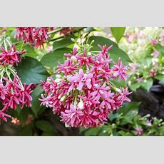 Names Of Climbing Plants Ehow