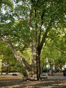 st pancras hardy tree the tree