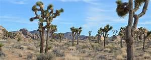 Coachella Valley Vacation Rentals by Vacasa