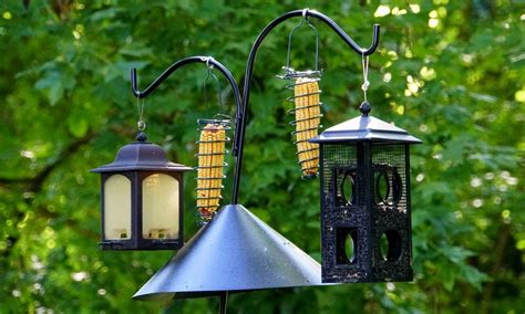 finch feeder reviews  buying guide faqs