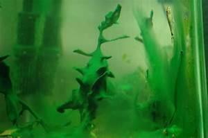 Cyanobacteria problem - twice! | AquaScaping World Forum