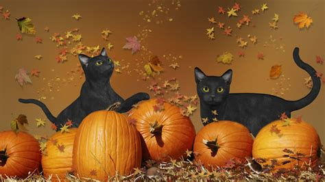 Black Cats Halloween Why Are They Considered Bad Luck