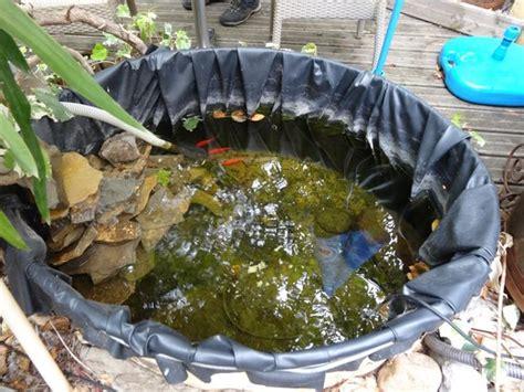 bassin poisson picture of auberge chez lezignan corbieres tripadvisor