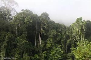 Danum Valley Rainforest -- borneo_3612