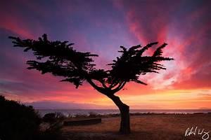 Peter Lik: Is Tree of Life Lik's Most Famous Photo? | Richard Wong Photography