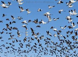Topic 12 – Migration | See Nature | Observing Nature in ...