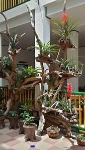 Kokedama Selber Machen : pin de misslene barros em jardim garden orchids garden e plants ~ Orissabook.com Haus und Dekorationen