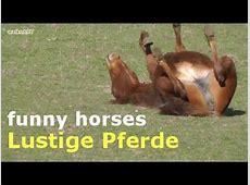 Lustige Pferde Funny horses YouTube