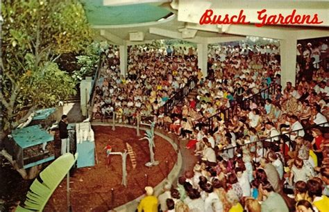 busch gardens lost and found 1000 images about memories on my the