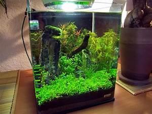 Aquarium Einrichten 60l : extravagante einrichtungen der nano cube ~ Michelbontemps.com Haus und Dekorationen