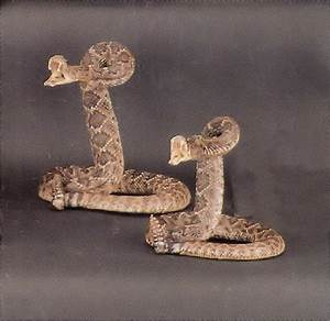Stuffed Rattlesnake from Tombstone, Arizona