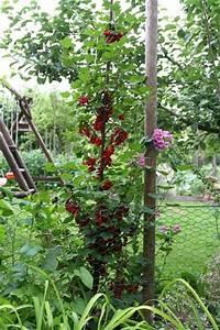 Heidelbeeren Pflanzen Zeitpunkt : beerengarten seite 1 gartengestaltung mein sch ner garten online ~ Orissabook.com Haus und Dekorationen