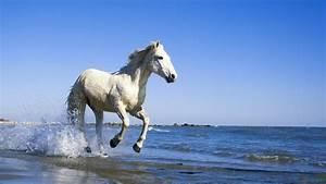 White Horse Running In Water 1600x900 #7061 HD Wallpaper ...