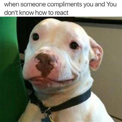 Dog Face Meme - dog meme face www pixshark com images galleries with a bite