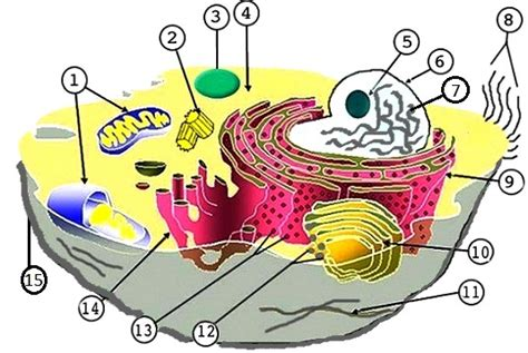 animal  plant cell labeling
