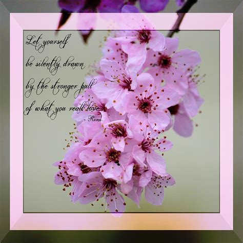 springtime quotes inspirational quotesgram