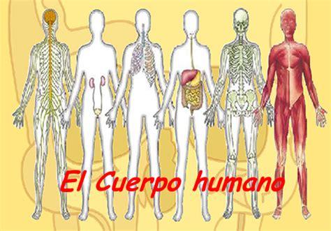 aparatos cuerpo humano