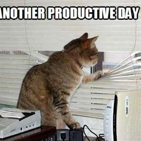 productive day kittyworks