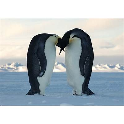 The Emperor PenguinAnimals Lover
