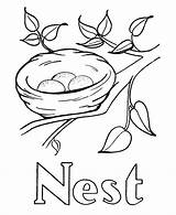Coloring Nest Printable Bird Drawing Birds Colouring Tree Simple Pre Template Alphabet Activity Sketch Popular Sheet Sheets Coloringhome sketch template