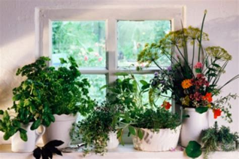 Herb Garden Indoor : How To Make An Indoor Herb Garden