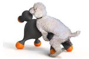 sprüche für hunde gummipuppe für hunde