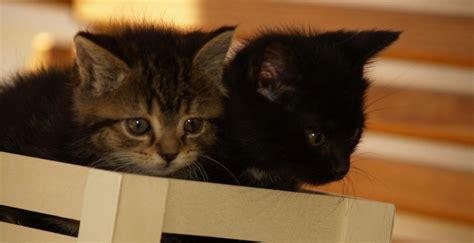 katzenbabys informationen und bilder rund um die katze
