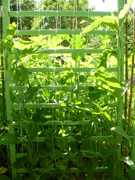 diy garden trellis ideas trash  blog
