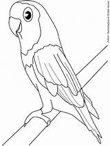 Parakeet Coloring Pages Print Colouring Birds sketch template