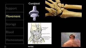 The Skeletal System - YouTube